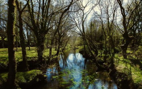 Paseo fluvial e literario – Río Madalena